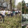 Hong Kong workers clamber over trees to reach office after typhoon | Daily Mail